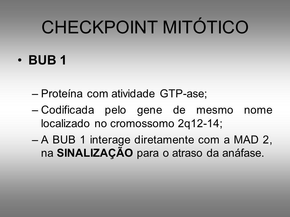 CHECKPOINT MITÓTICO BUB 1 –Proteína com atividade GTP-ase; –Codificada pelo gene de mesmo nome localizado no cromossomo 2q12-14; –A BUB 1 interage dir