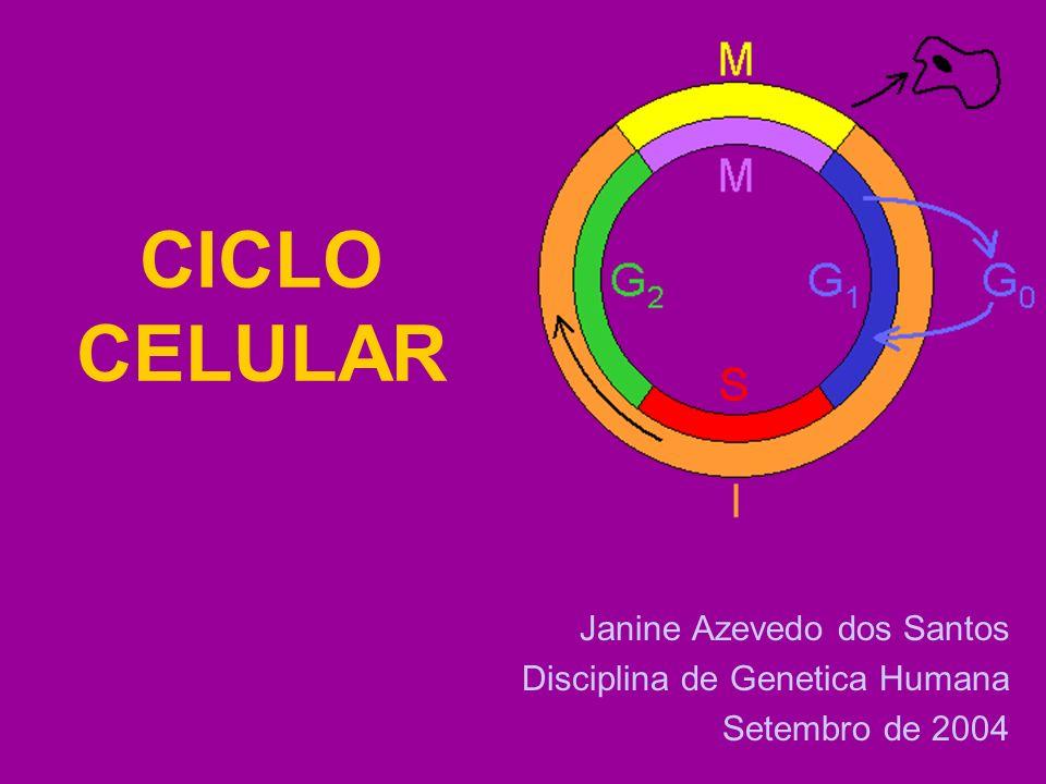 CICLO CELULAR Janine Azevedo dos Santos Disciplina de Genetica Humana Setembro de 2004