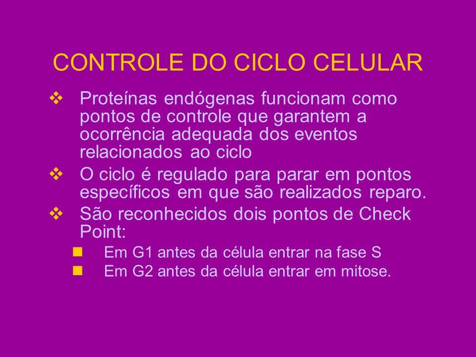 CONTROLE DO CICLO CELULAR Proteínas endógenas funcionam como pontos de controle que garantem a ocorrência adequada dos eventos relacionados ao ciclo O