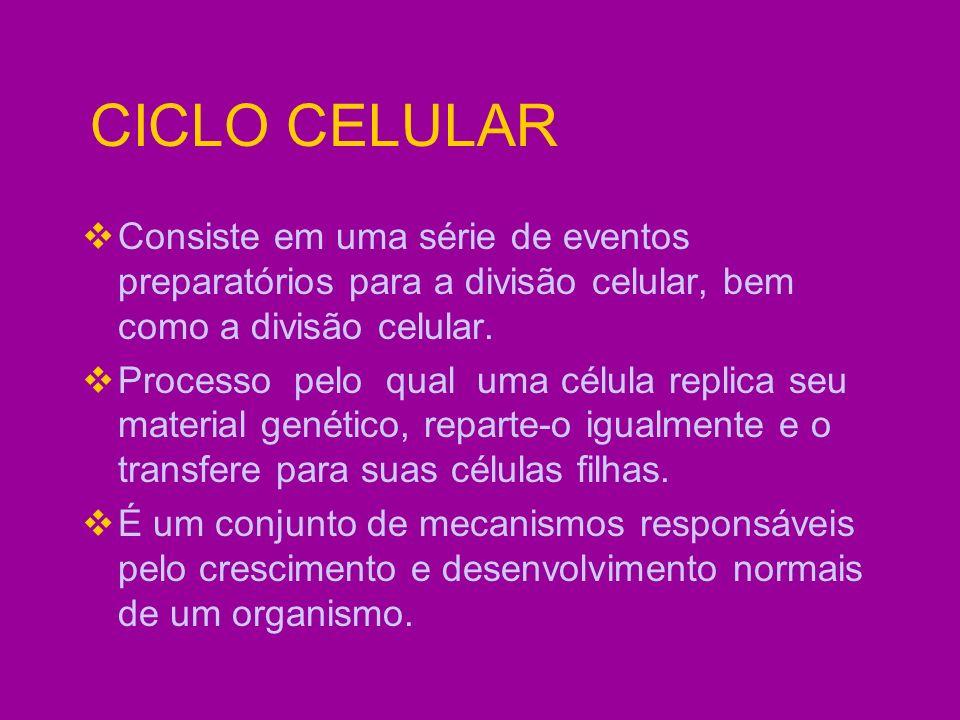 CICLO CELULAR É um processo contínuo dividido em 2 fases principais: INTERFASE MITOSE A intérfase é sempre a fase mais demorada (90% a 95% do tempo total gasto por uma célula durante o seu ciclo).
