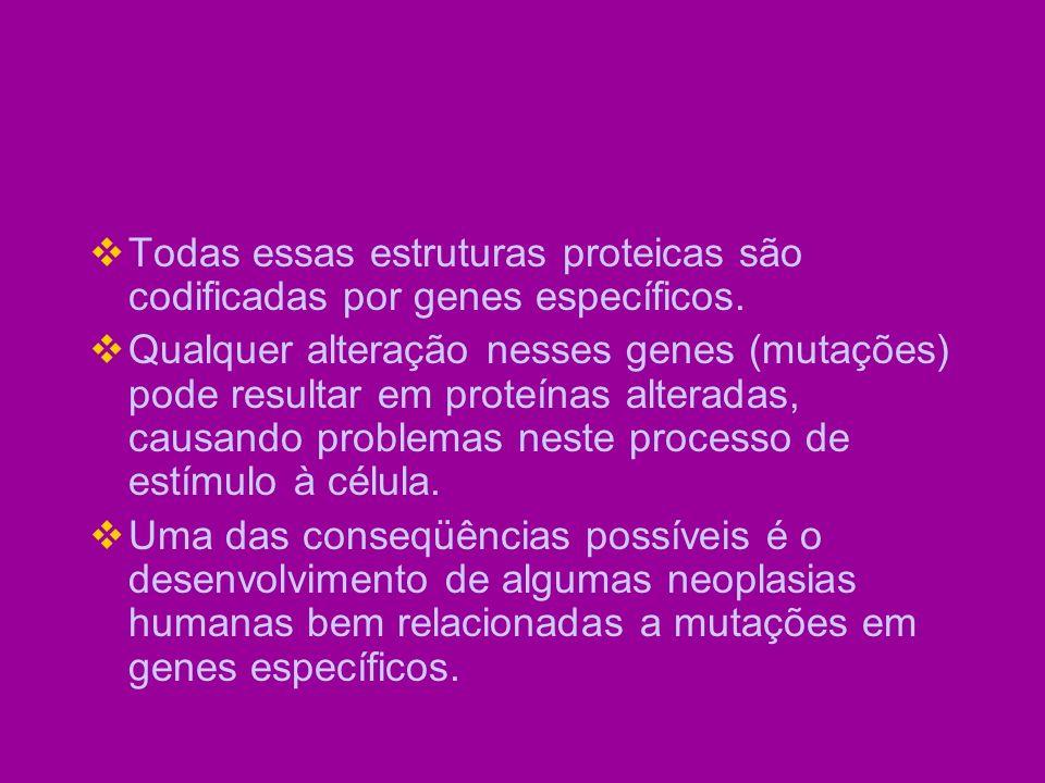CategoriaProtooncogeneTumores Associados Fatores de Crescimento PDGF-cadeia beta sisastrocitoma Receptores de fator de crescimento Família EGFerb carcinoma de célula escamosa; astrocitoma; adenocarcinoma de mama, ovário e estômago Proteínas transdutoras de sinais Ligadas ao GTPrascarcinoma de cólon, pulmão e pâncreas; melanoma; leucemia mielóide aguda e linfoblástica; carcinoma de tireóide; carcinoma do trato genitourinário Proteínas reguladoras nucleares Ativadores da transcrição myc N-myc linfoma de Burkitt; carcinoma de pulmão, mama e colo uterino; neuroblastoma Reguladores do ciclo celular CiclinasciclinaDCâncer de mama, esôfago e fígado Cinase dependente de ciclina CDK4Glioblastoma; melanoma e sarcoma