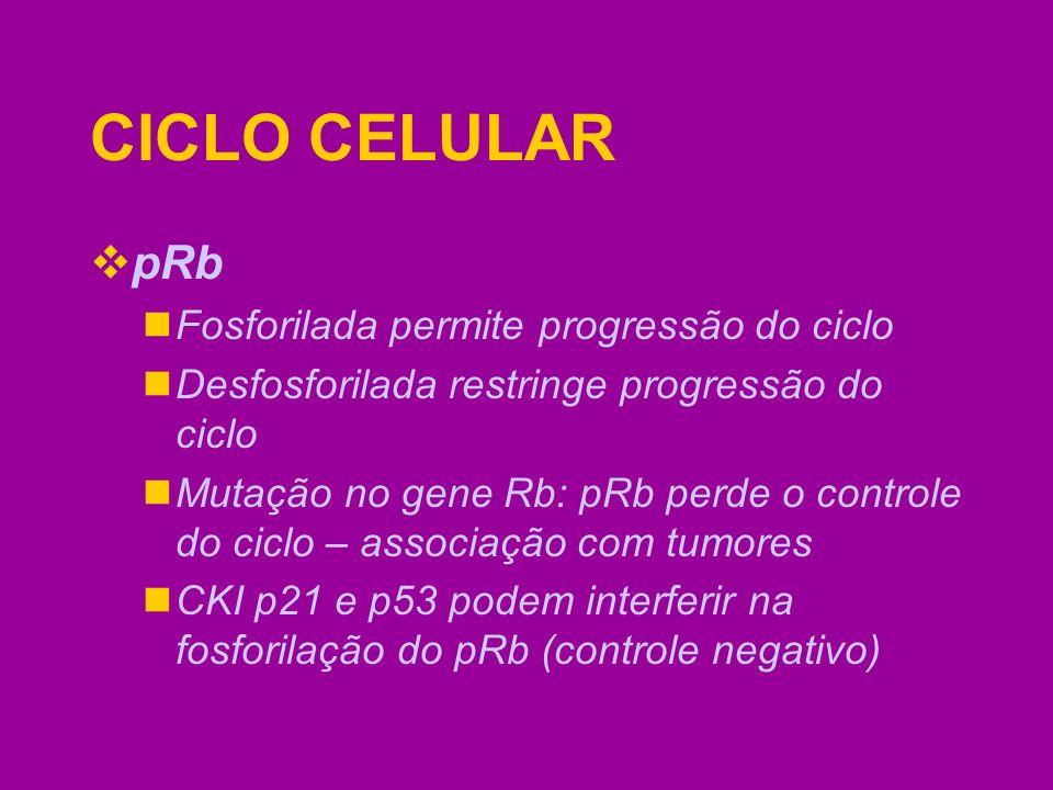 CICLO CELULAR pRb Fosforilada permite progressão do ciclo Desfosforilada restringe progressão do ciclo Mutação no gene Rb: pRb perde o controle do cic