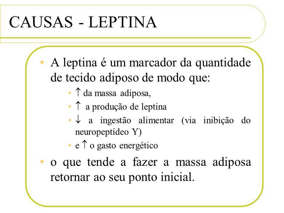 CAUSAS - LEPTINA A leptina é um marcador da quantidade de tecido adiposo de modo que: da massa adiposa, a produção de leptina a ingestão alimentar (vi