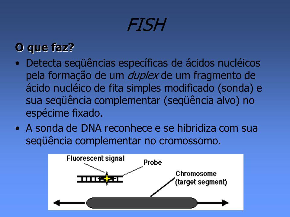 FISH - Vantagens Pode ser aplicada tanto para células em pró- metáfase, metáfase como em interfase, o que permite fazer diagnósticos citogenéticos mais acurados, tanto para anormalidades constitucionais, quanto para mudanças cromossômicas adquiridas como no caso de células cancerosas.