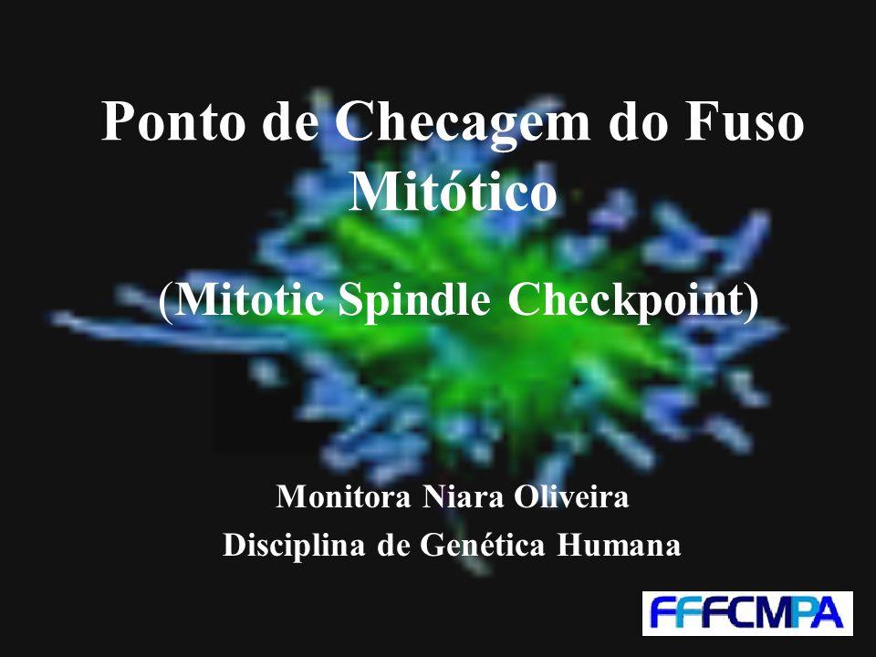 Ponto de Checagem do Fuso Mitótico (Mitotic Spindle Checkpoint) Monitora Niara Oliveira Disciplina de Genética Humana