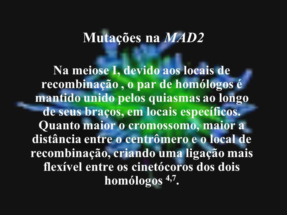 Mutações na MAD2 Na meiose I, devido aos locais de recombinação, o par de homólogos é mantido unido pelos quiasmas ao longo de seus braços, em locais
