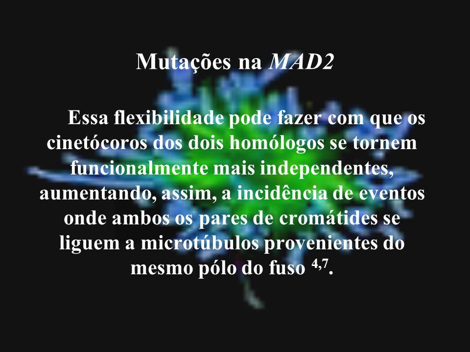 Mutações na MAD2 Essa flexibilidade pode fazer com que os cinetócoros dos dois homólogos se tornem funcionalmente mais independentes, aumentando, assi