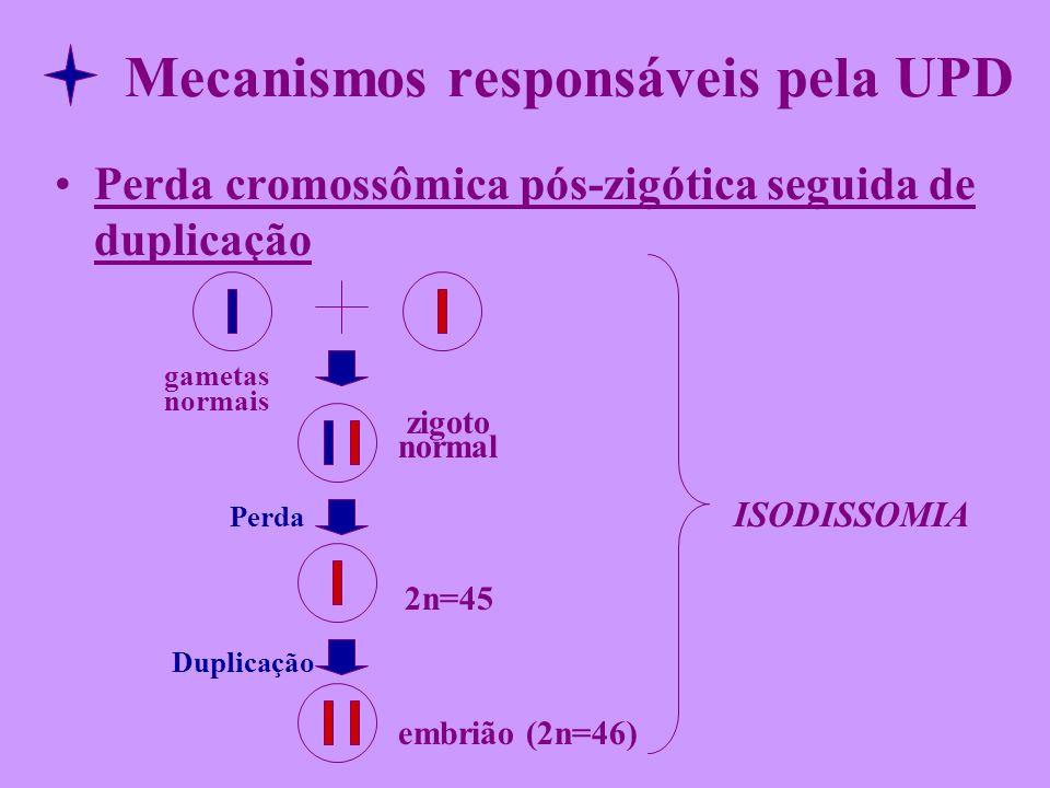 Mecanismos responsáveis pela UPD Perda cromossômica pós-zigótica seguida de duplicação gametas normais zigoto normal Perda ISODISSOMIA 2n=45 Duplicaçã