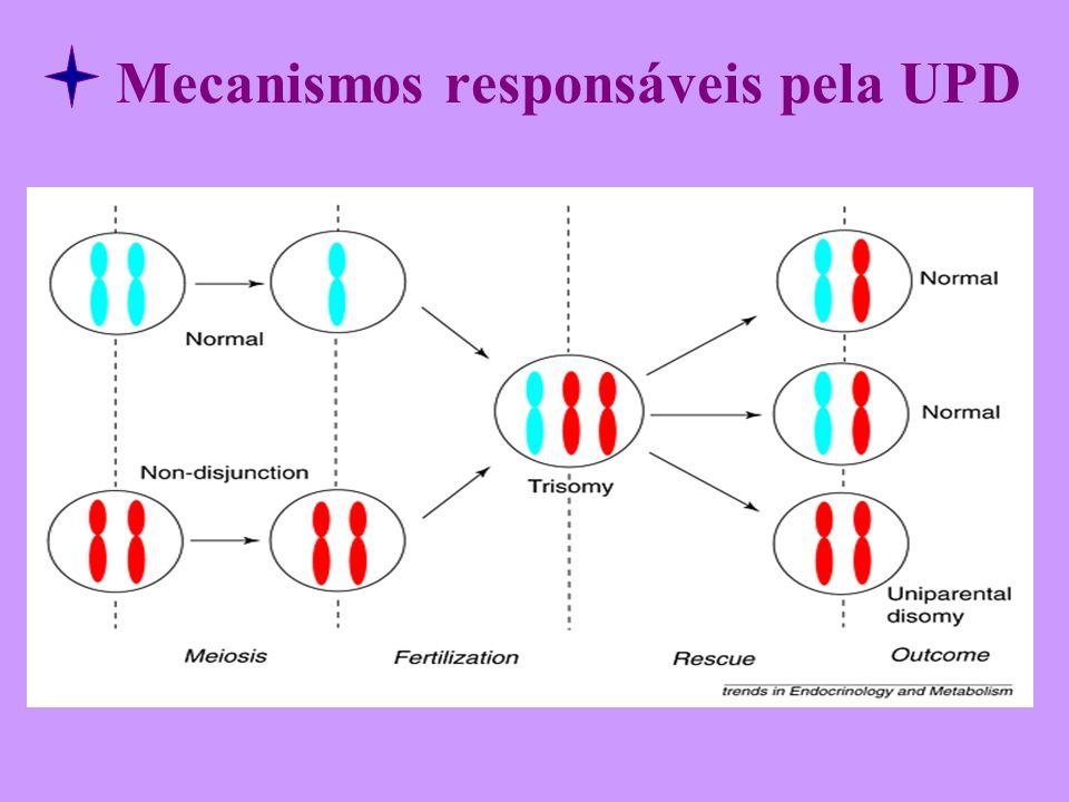 Mecanismos responsáveis pela UPD