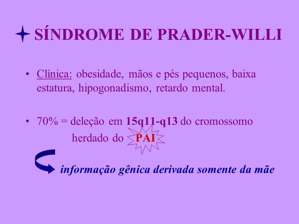 SÍNDROME DE PRADER-WILLI Clínica: obesidade, mãos e pés pequenos, baixa estatura, hipogonadismo, retardo mental. 70% = deleção em 15q11-q13 do cromoss