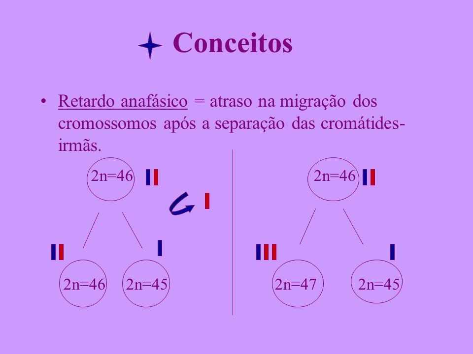 Conceitos Retardo anafásico = atraso na migração dos cromossomos após a separação das cromátides- irmãs. 2n=46 2n=46 2n=46 2n=45 2n=47 2n=45