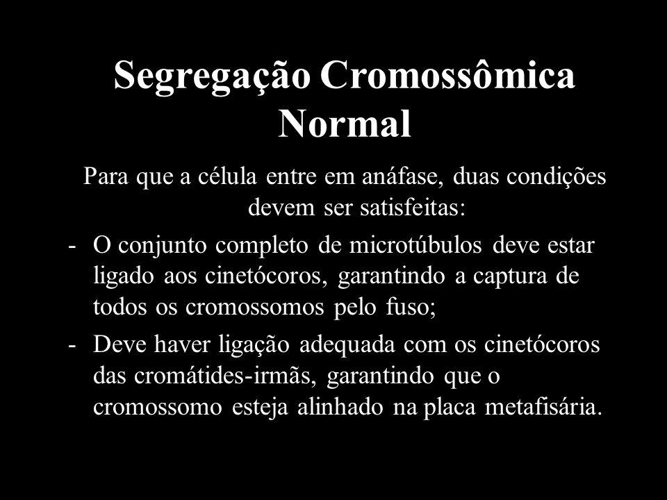 Segregação Cromossômica Normal Para que a célula entre em anáfase, duas condições devem ser satisfeitas: -O conjunto completo de microtúbulos deve est