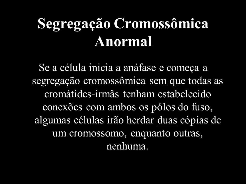 Segregação Cromossômica Anormal Se a célula inicia a anáfase e começa a segregação cromossômica sem que todas as cromátides-irmãs tenham estabelecido