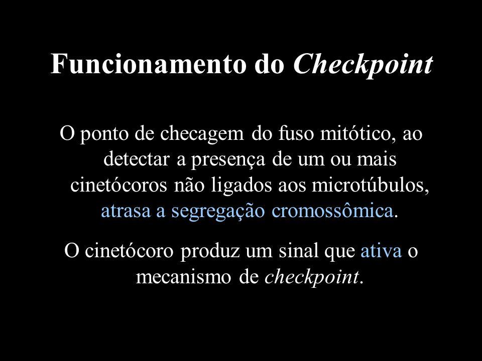Funcionamento do Checkpoint O ponto de checagem do fuso mitótico, ao detectar a presença de um ou mais cinetócoros não ligados aos microtúbulos, atras