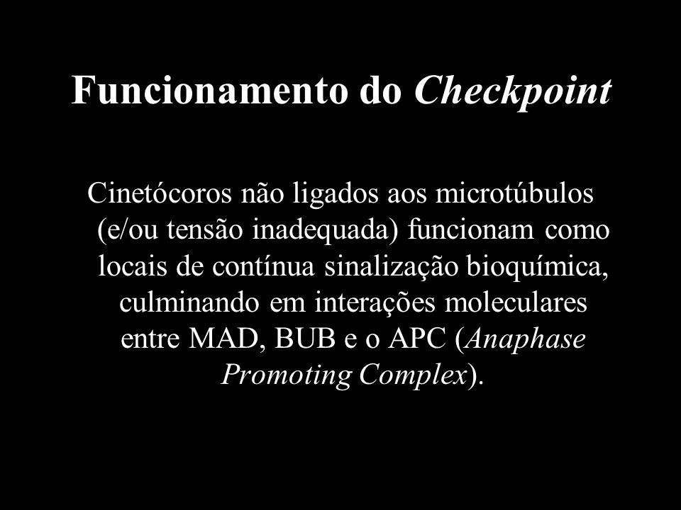 Funcionamento do Checkpoint Cinetócoros não ligados aos microtúbulos (e/ou tensão inadequada) funcionam como locais de contínua sinalização bioquímica