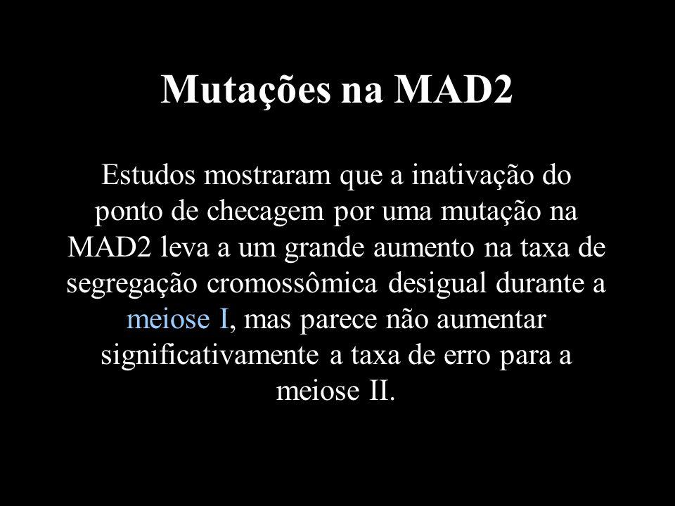 Mutações na MAD2 Estudos mostraram que a inativação do ponto de checagem por uma mutação na MAD2 leva a um grande aumento na taxa de segregação cromos
