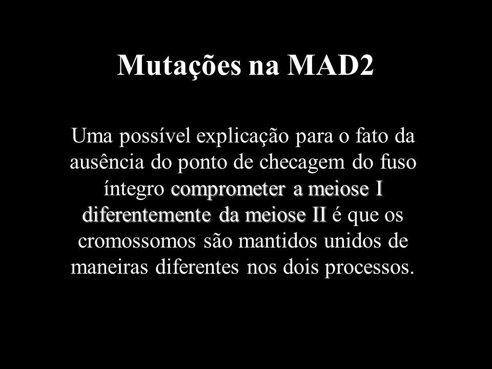 Mutações na MAD2 comprometer a meiose I diferentemente da meiose II Uma possível explicação para o fato da ausência do ponto de checagem do fuso ínteg