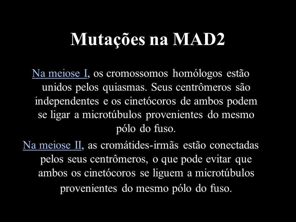 Mutações na MAD2 Na meiose I, os cromossomos homólogos estão unidos pelos quiasmas. Seus centrômeros são independentes e os cinetócoros de ambos podem