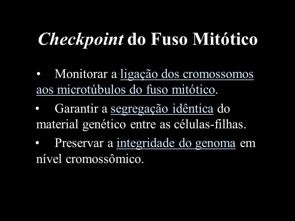 Checkpoint do Fuso Mitótico Monitorar a ligação dos cromossomos aos microtúbulos do fuso mitótico. Garantir a segregação idêntica do material genético
