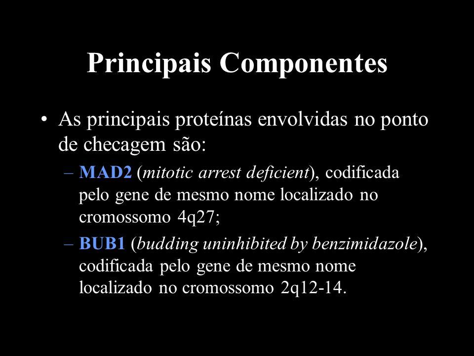 Principais Componentes As principais proteínas envolvidas no ponto de checagem são: –MAD2 (mitotic arrest deficient), codificada pelo gene de mesmo no