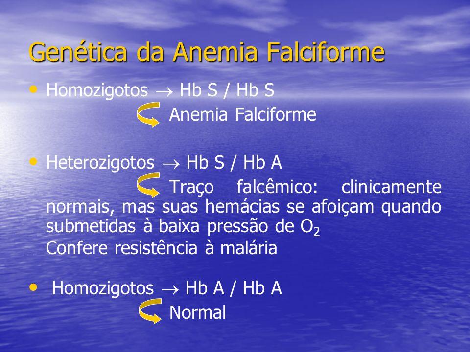 Homozigotos Hb S / Hb S Anemia Falciforme Heterozigotos Hb S / Hb A Traço falcêmico: clinicamente normais, mas suas hemácias se afoiçam quando submetidas à baixa pressão de O 2 Confere resistência à malária Homozigotos Hb A / Hb A Normal Genética da Anemia Falciforme