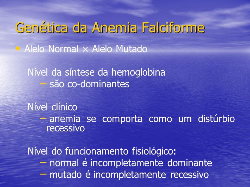 Alelo Normal × Alelo Mutado Nível da síntese da hemoglobina – – são co-dominantes Nível clínico – – anemia se comporta como um distúrbio recessivo Nível do funcionamento fisiológico: – – normal é incompletamente dominante – – mutado é incompletamente recessivo Genética da Anemia Falciforme