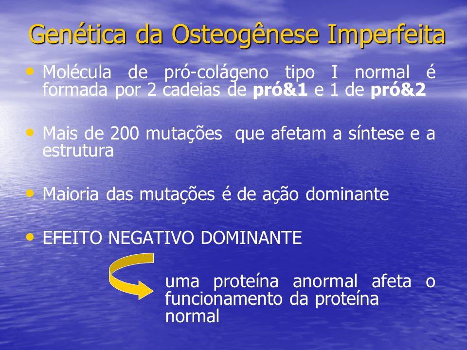 Molécula de pró-colágeno tipo I normal é formada por 2 cadeias de pró&1 e 1 de pró&2 Mais de 200 mutações que afetam a síntese e a estrutura Maioria das mutações é de ação dominante EFEITO NEGATIVO DOMINANTE uma proteína anormal afeta o funcionamento da proteína normal Genética da Osteogênese Imperfeita