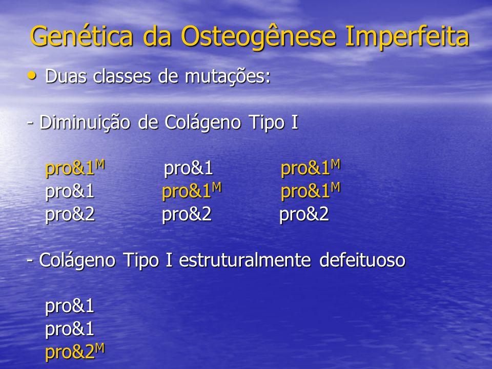 Duas classes de mutações: Duas classes de mutações: - Diminuição de Colágeno Tipo I pro&1 M pro&1 pro&1 M pro&1 pro&1 M pro&1 M pro&2 pro&2 pro&2 - Colágeno Tipo I estruturalmente defeituoso pro&1pro&1 pro&2 M Genética da Osteogênese Imperfeita