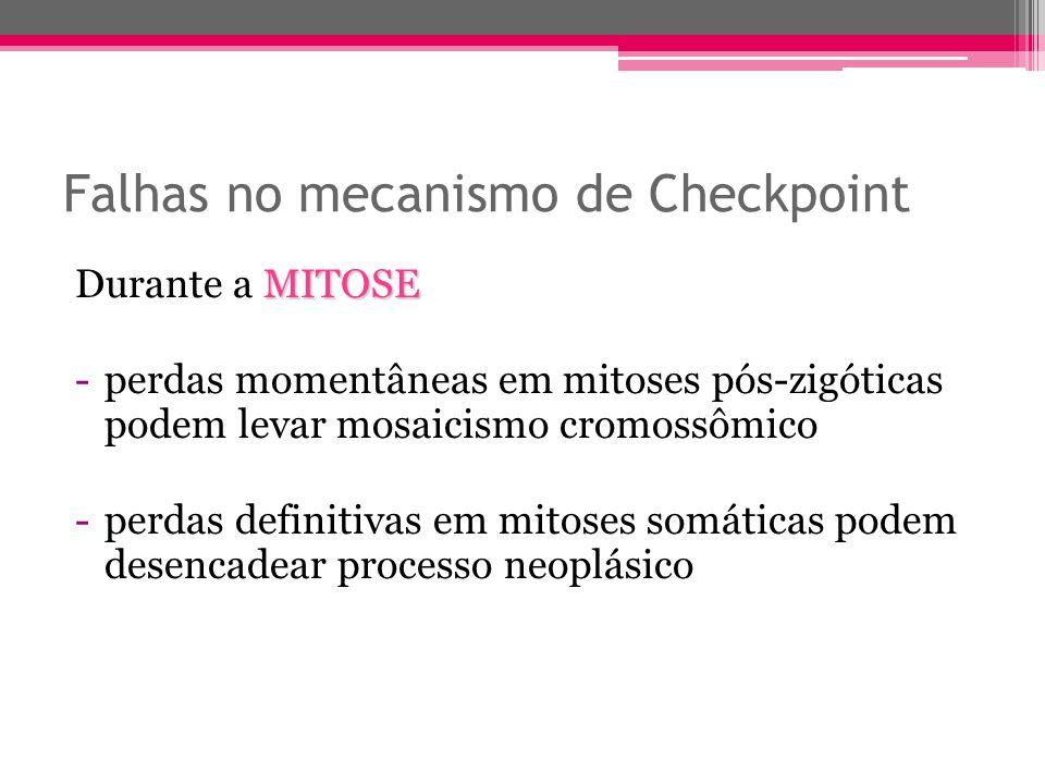 Falhas no mecanismo de Checkpoint MITOSE Durante a MITOSE -perdas momentâneas em mitoses pós-zigóticas podem levar mosaicismo cromossômico -perdas def