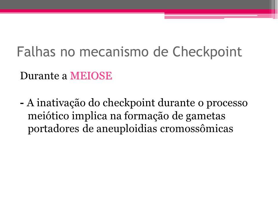 Falhas no mecanismo de Checkpoint MEIOSE Durante a MEIOSE - A inativação do checkpoint durante o processo meiótico implica na formação de gametas port