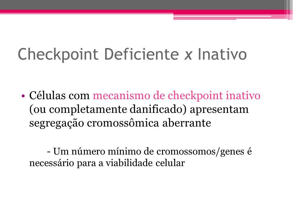 Checkpoint Deficiente x Inativo Células com mecanismo de checkpoint inativo (ou completamente danificado) apresentam segregação cromossômica aberrante