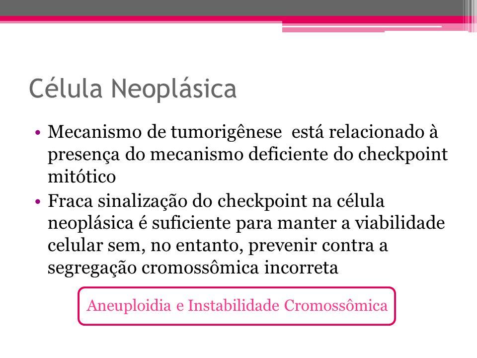Célula Neoplásica Mecanismo de tumorigênese está relacionado à presença do mecanismo deficiente do checkpoint mitótico Fraca sinalização do checkpoint