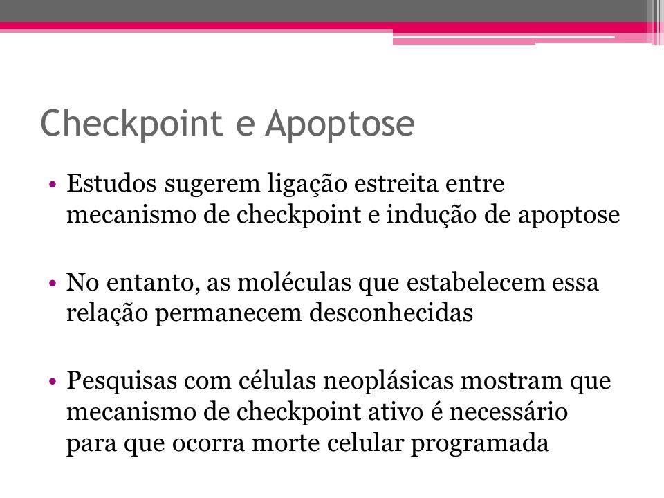 Checkpoint e Apoptose Estudos sugerem ligação estreita entre mecanismo de checkpoint e indução de apoptose No entanto, as moléculas que estabelecem es