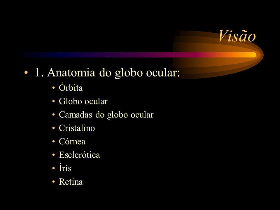 Visão 1. Anatomia do globo ocular: Órbita Globo ocular Camadas do globo ocular Cristalino Córnea Esclerótica Íris Retina