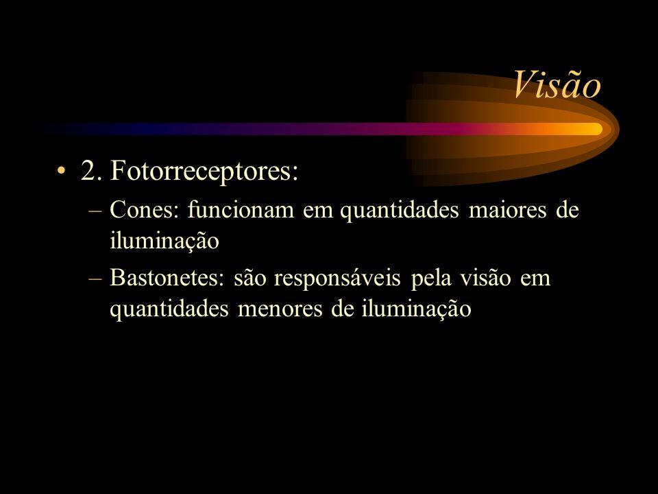 Visão 2. Fotorreceptores: –Cones: funcionam em quantidades maiores de iluminação –Bastonetes: são responsáveis pela visão em quantidades menores de il