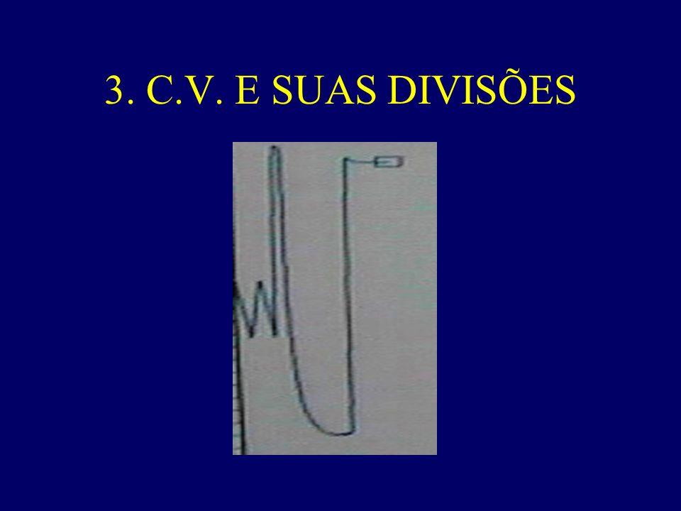 3. C.V. E SUAS DIVISÕES