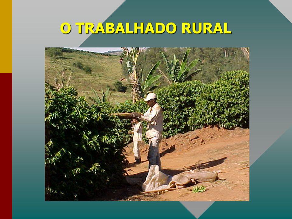 O TRABALHADO RURAL