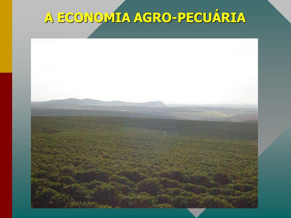 A ECONOMIA AGRO-PECUÁRIA