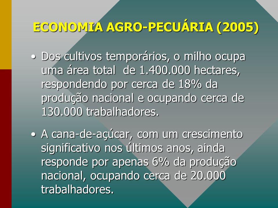 ECONOMIA AGRO-PECUÁRIA (2005) Dos cultivos temporários, o milho ocupa uma área total de 1.400.000 hectares, respondendo por cerca de 18% da produção n