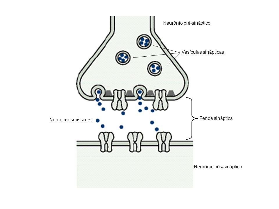 Neurônio pré-sináptico Neurônio pós-sináptico Neurotransmissores Fenda sináptica Vesículas sinápticas