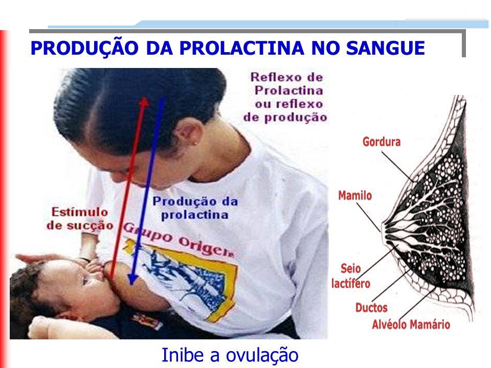 PRODUÇÃO DA PROLACTINA NO SANGUE Inibe a ovulação