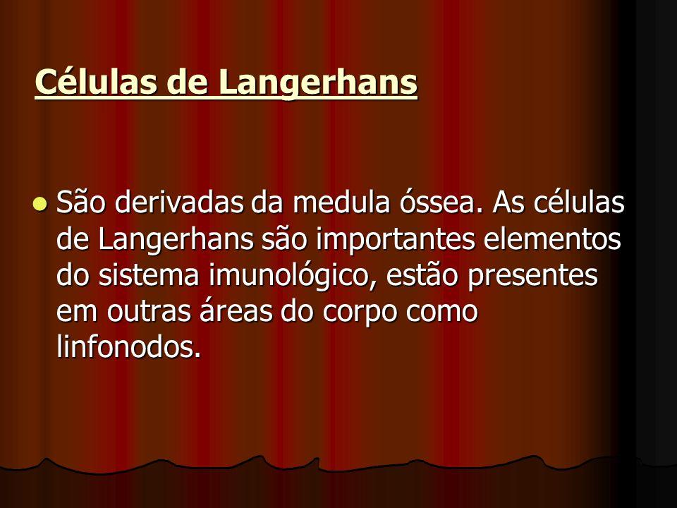 Células de Langerhans São derivadas da medula óssea. As células de Langerhans são importantes elementos do sistema imunológico, estão presentes em out