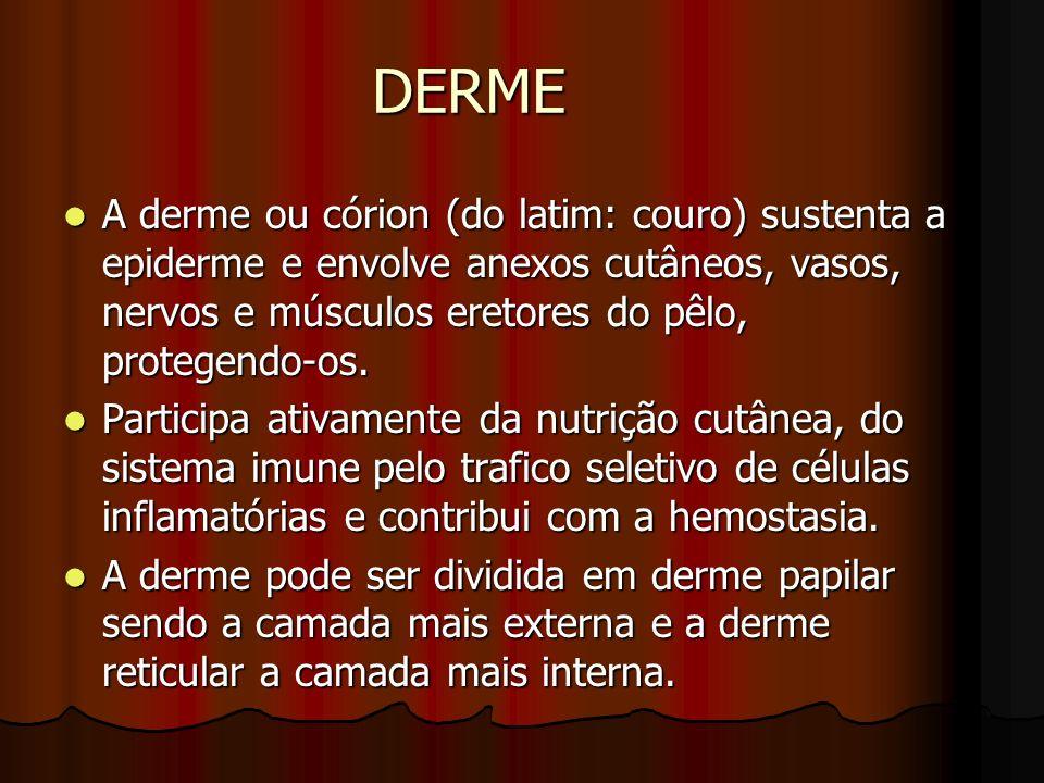 DERME A derme ou córion (do latim: couro) sustenta a epiderme e envolve anexos cutâneos, vasos, nervos e músculos eretores do pêlo, protegendo-os. A d