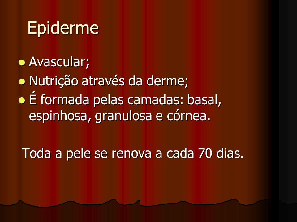 Epiderme Avascular; Avascular; Nutrição através da derme; Nutrição através da derme; É formada pelas camadas: basal, espinhosa, granulosa e córnea. É