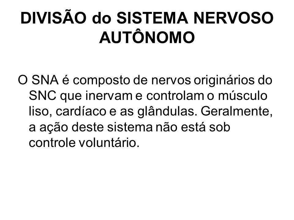DIVISÃO do SISTEMA NERVOSO AUTÔNOMO O SNA é composto de nervos originários do SNC que inervam e controlam o músculo liso, cardíaco e as glândulas. Ger