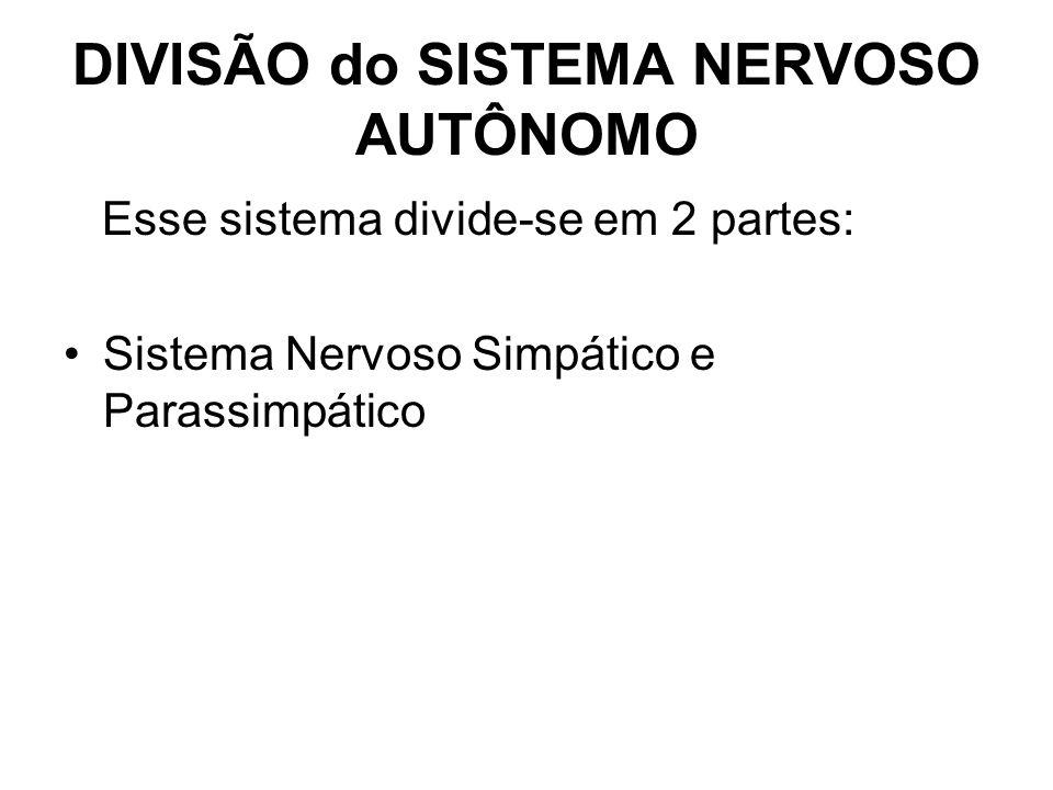 DIVISÃO do SISTEMA NERVOSO AUTÔNOMO Esse sistema divide-se em 2 partes: Sistema Nervoso Simpático e Parassimpático