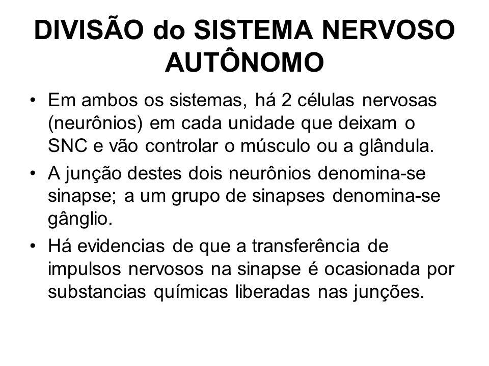 DIVISÃO do SISTEMA NERVOSO AUTÔNOMO Em ambos os sistemas, há 2 células nervosas (neurônios) em cada unidade que deixam o SNC e vão controlar o músculo