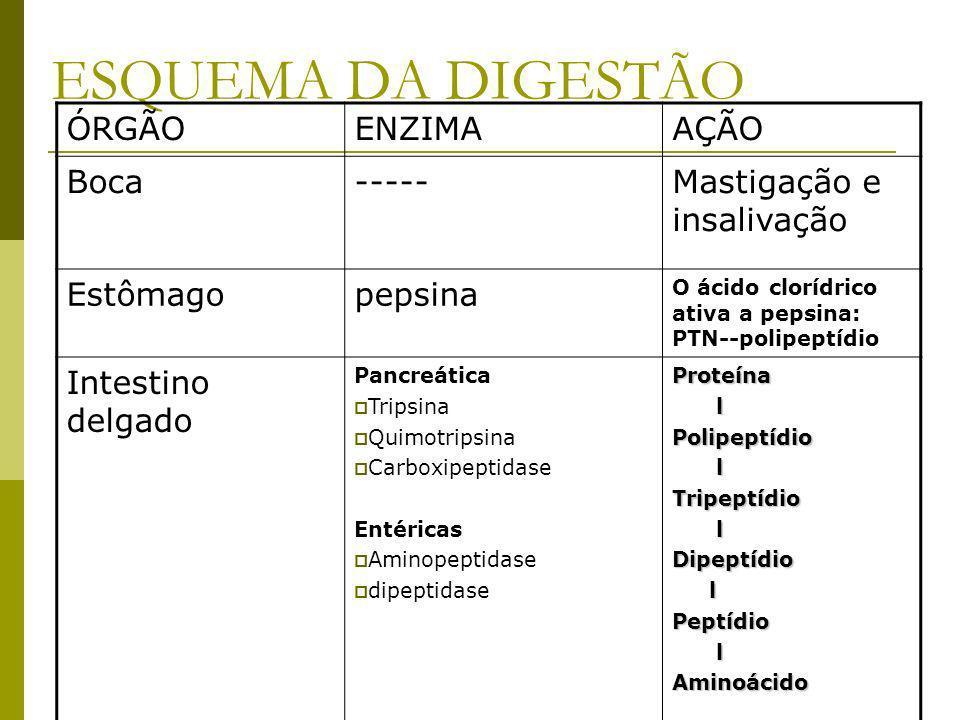 ESQUEMA DA DIGESTÃO ÓRGÃOENZIMAAÇÃO Boca-----Mastigação e insalivação Estômagopepsina O ácido clorídrico ativa a pepsina: PTN--polipeptídio Intestino delgado Pancreática Tripsina Quimotripsina Carboxipeptidase Entéricas Aminopeptidase dipeptidaseProteína lPolipeptídio lTripeptídio lDipeptídio lPeptídio lAminoácido