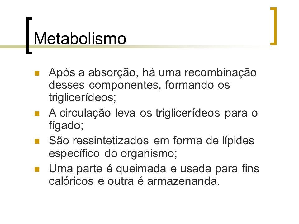 Metabolismo Após a absorção, há uma recombinação desses componentes, formando os triglicerídeos; A circulação leva os triglicerídeos para o fígado; Sã