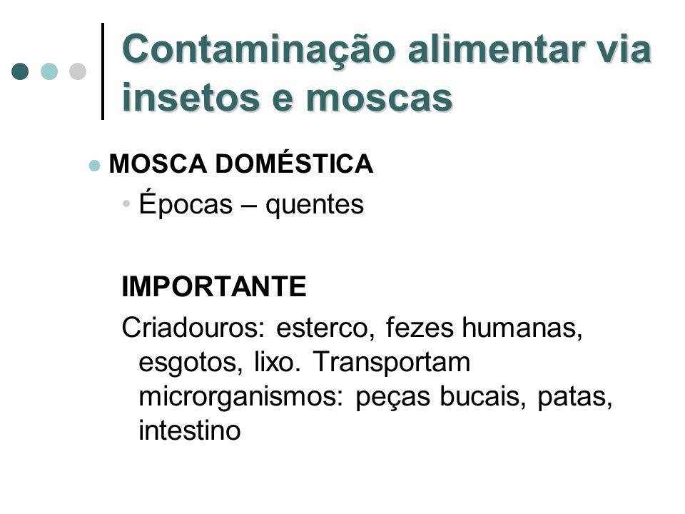 Contaminação alimentar via insetos e moscas MOSCA DOMÉSTICA Épocas – quentes IMPORTANTE Criadouros: esterco, fezes humanas, esgotos, lixo. Transportam